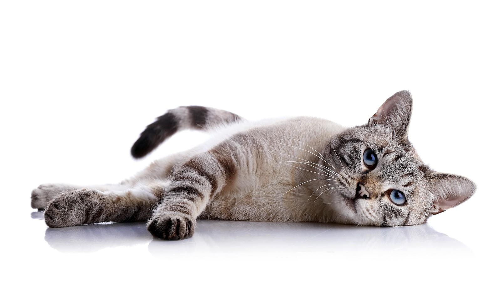 Coronavirus übertragung Katze