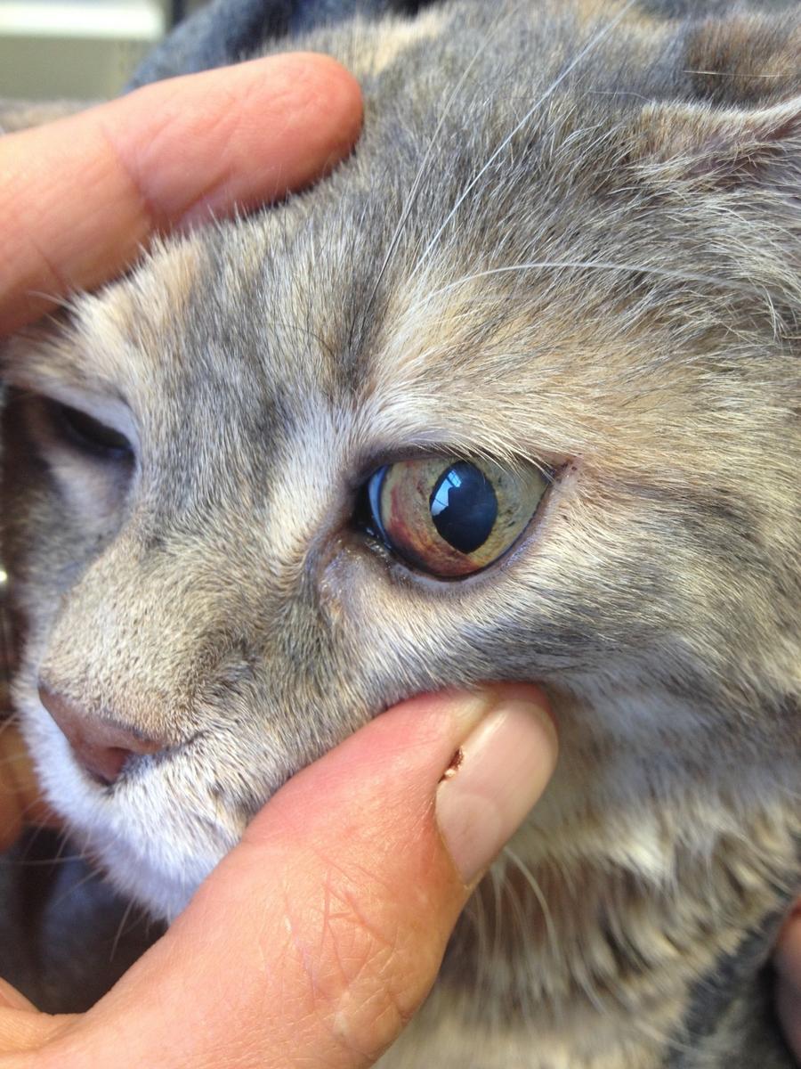 Wackelt augen katze mit kopf und Brauche dringend
