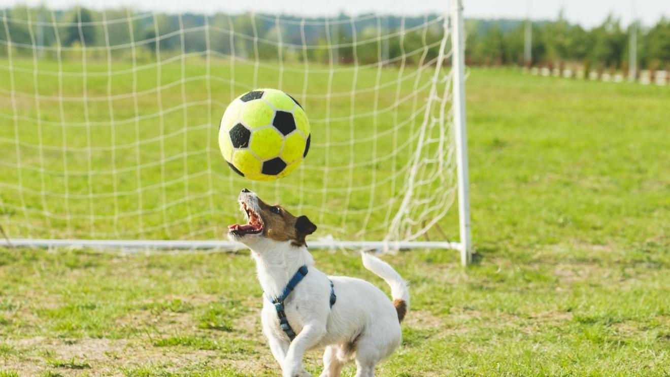 Vokabeltraining mit dem Hund