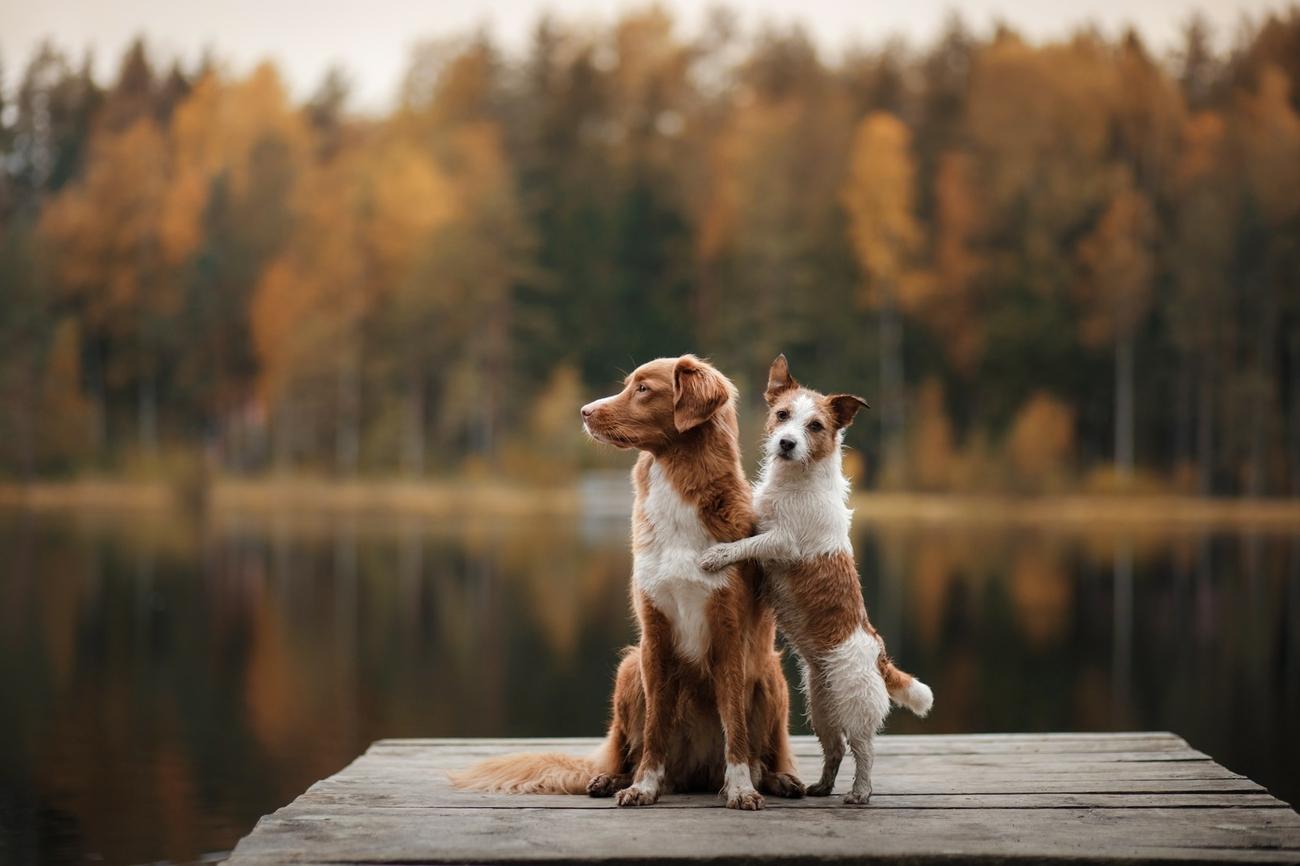 Das Müssen Halter über Die Kastration Beim Hund Wissen