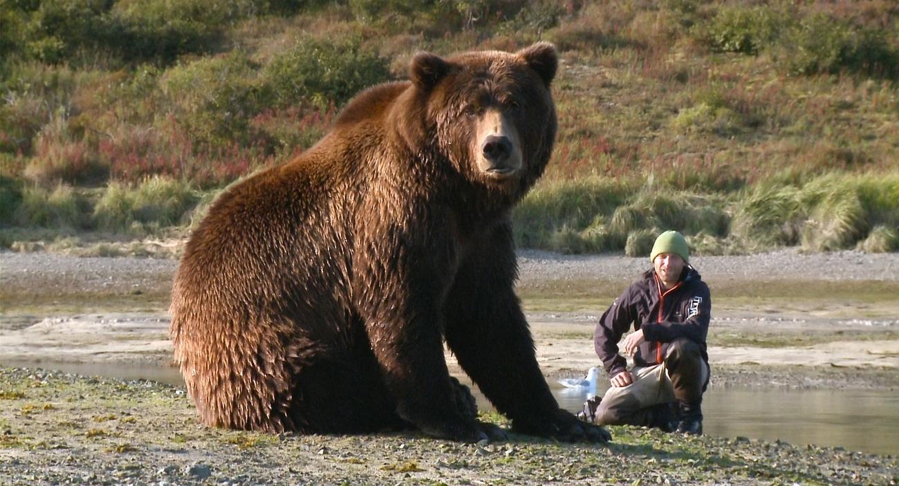 Im Land der wilden Riesen-Grizzlys
