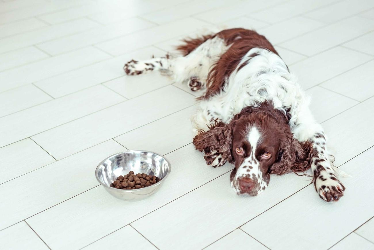 Tumordiät bei Hund und Katze - sechs Tipps